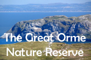 Click for the Great Orme Nature Reserve
